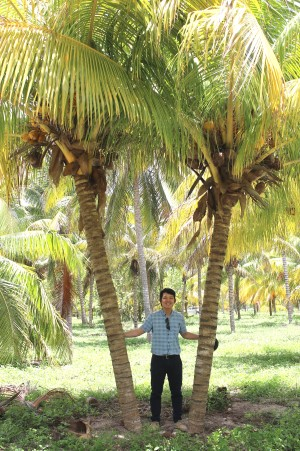 Quang Nguyen between coconut trees